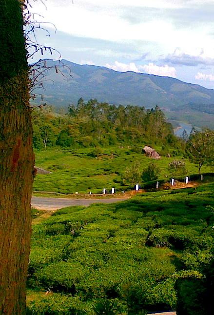 Munnar homestay Kerala