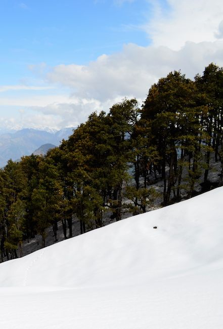 A ski holiday in Auli is an incredible experience